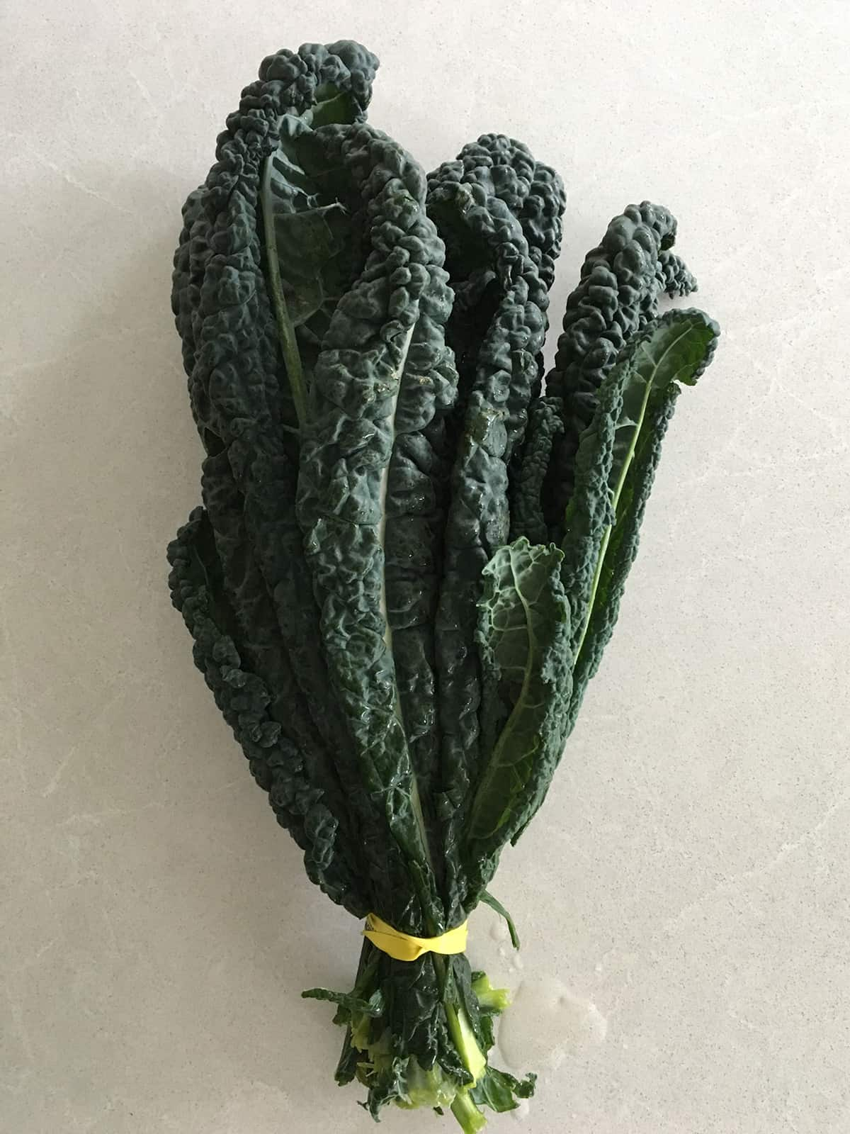One bunch of lacinato kale on a light grey marble countertop